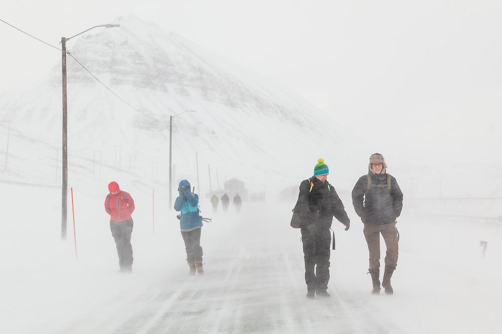UNIS students – Renée Rookus (l-r), Ellen Nissen, Stefan Schöttl, and Robin de Vries – walk to class through a snowstorm from their rooms in Nybyen, Longyearbyen, Svalbard.