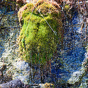 Moss Growing Near A Waterfall Resembles A Moose Head In The Upper Peninsula