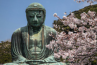 Daibutsu - Great Buddha of Kamakura - this monumental bronze statue of Buddha  was built in 1252 cast by Ono Goroemon, a leading maker at that period of time.  There are traces of gold leaf near the statue's ears as the entire statue was originally gilded.  The hall in which the Daibutsu was housed was destroyed by a storm in 1334, rebuilt, then  damaged by yet another storm in 1369.  It was rebuilt a third time but the last building washed away in the tsunami of September 1498.  Since then, the Great Buddha has stood in the open, as it is today.