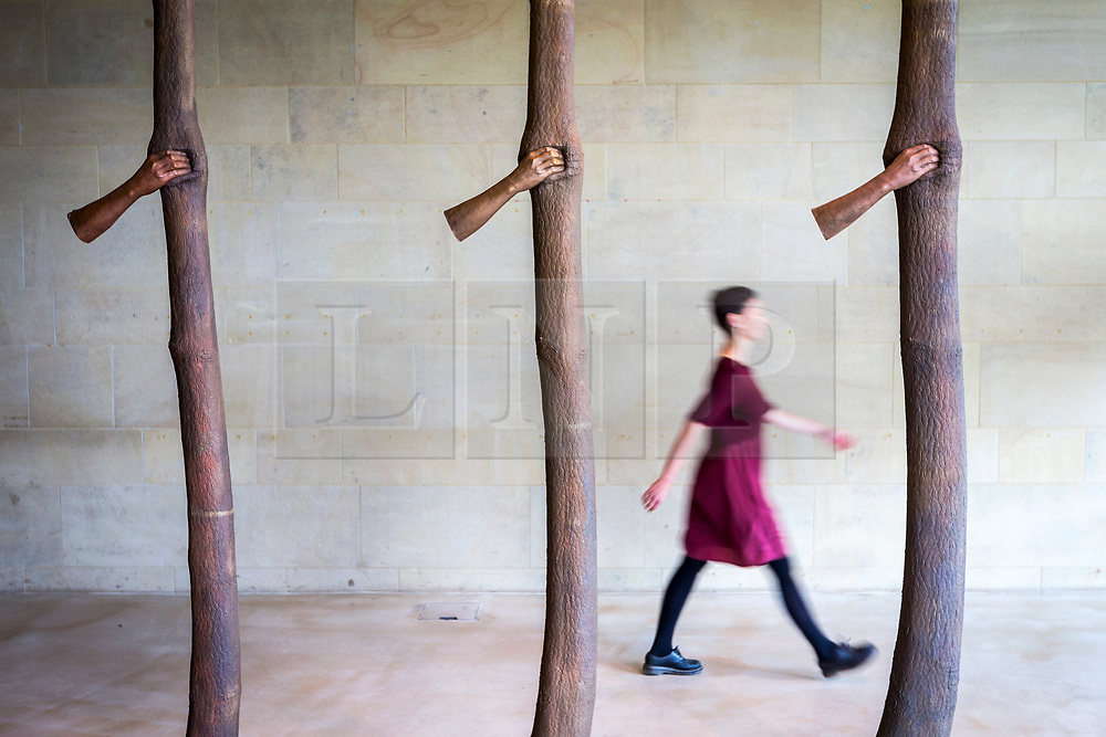 """© Licensed to London News Pictures. 24/05/2018. Wakefield UK. A visitor walks past a sculpture by Giuseppe Penone made of Bronze & called """"Trattenere 6,8,12 anni di crescita"""" at the Yorkshire Sculpture park this morning. Giuseppe Penone presents his extensive new exhibition in YSP's light-filled Underground Gallery and across the historic landscape. Works drawn from the past five decades of Penone's career, including many never shown in the UK, trace his evolving and thoughtful consideration of humanity's intimate relationship with the natural world. His poetic practice addresses themes around the body, nature, time, touch and memory, played out across different materials from stone, acacia thorns and graphite, to thousands of laurel leaves. Photo credit: Andrew McCaren/LNP"""