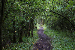 Calvert, UK. 27 July, 2020. A path winds its way through trees at Calvert Jubilee Nature Reserve. On 22nd July, the Berks, Bucks and Oxon Wildlife Trust (BBOWT) reported that it had been informed of HS2's intention to take possession of part of Calvert Jubilee nature reserve, which is home to bittern, breeding tern and some of the UK's rarest butterflies, on 28th July to undertake unspecified clearance works in connection with the high-speed rail link.