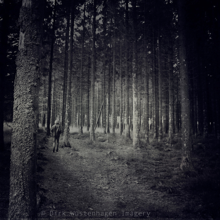 haunting fir tree forest in November rain.<br /> Prints & more: http://society6.com/DirkWuestenhagenImagery/In-Search-for-Gretel_Print