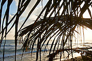 Beach sunrise through the palm trees in Cabarette, Dominican Republic