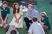 Duke and Duchess of Cambridge visit Taronga Zoo, Sydney , Australia. Catherine, Duchess of Cambridge and Prince William, Duke of Cambridge meet a echidna, 20 April 2014