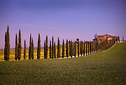 Cypress trees line the road to a Tuscan farmhouse on a hill
