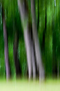 green forest abstract with motion blur
