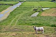 Nederland, Kinderdijk, 30-5-2020 Typisch nederlands, hollands, landschap met groene weilanden in polders, water in sloten en koeien in laagland .Foto: ANP/ Hollandse Hoogte/ Flip Franssen
