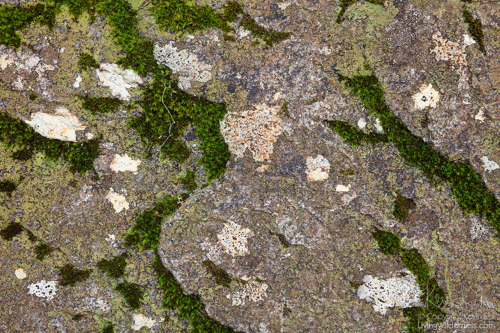 Lichen and moss form patterns on an exposed rock face near Lake Dorothy in the Alpine Lakes Wilderness of Washington state.