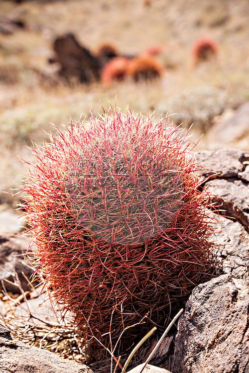 Cactus and scrub in the Mojave desert outside of Twentynine Palms, California.