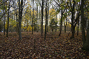 Young trees in Warwickshire landscape on 10th November 2020 near Henley-in-Arden, United Kingdom.