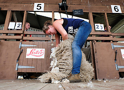 © Licensed to London News Pictures.14/07/15<br /> Harrogate, UK. <br /> <br /> ANNA HALL takes part in a sheep shearing competition on the opening day of the Great Yorkshire Show.  <br /> <br /> England's premier agricultural show opened it's gates today for the start of three days of showcasing the best in British farming and the countryside.<br /> <br /> The event, which attracts over 130,000 visitors each year displays the cream of the country's livestock and offers numerous displays and events giving the chance for visitors to see many different countryside activities.<br /> <br /> Photo credit : Ian Forsyth/LNP