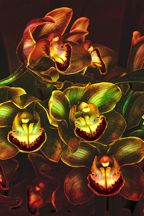 A bold Orchidaceae interpretation reflecting the intensity and subtly contrast of the Orchid. The Greek myth of Orchis explains the origin of the plants.