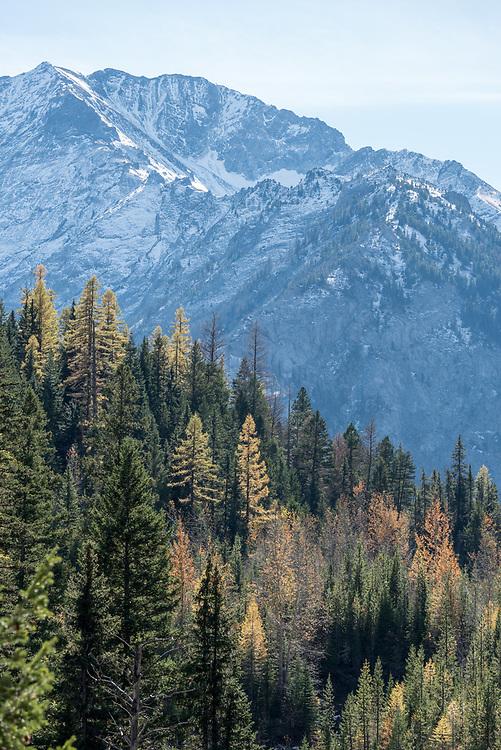 Forested ridge and Sacajawea Peak, Wallowa Mountains, Oregon.