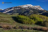 Aspen grove in spring with Fairview Mountain along the Rocky Mountain Freont near Augusta, Montana, USA