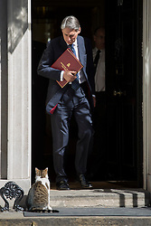 © licensed to London News Pictures. London, UK 30/04/2013. Secretary of State for Defence Philip Hammond attending cabinet meeting on Downing Street on Tuesday, 30 April 2013. Photo credit: Tolga Akmen/LNP