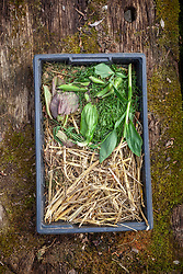 Showing material suitable for adding to a compost heap