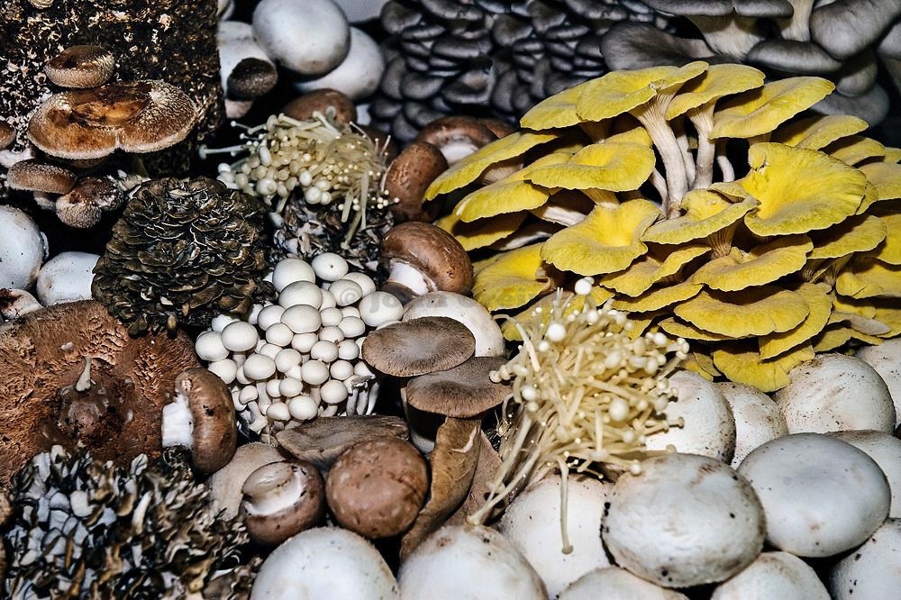 A variety of edible mushrooms.