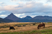 CABALLOS PASTANDO EN LAS AFUERAS DE USHUAIA, MONTE OLIVA AL FONDO, PROVINCIA DE TIERRA DEL FUEGO,  PATAGONIA, ARGENTINA (PHOTO BY © MARCO GUOLI - ALL RIGHTS RESERVED. CONTACT THE AUTHOR FOR ANY KIND OF IMAGE REPRODUCTION)