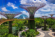 The Supertree Grove and Cloud Forest Dome from the OCBC Skyway, Gardens by the Bay, Singapore, Republic of Singapore