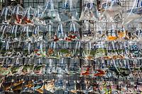 goldfish market Mong Kok Kowloon in Hong Kong