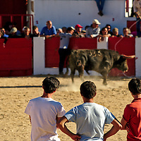 """Young men """"measuring"""" the bull's strength and bravery"""