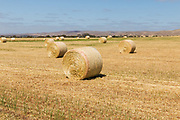 Round hay bales in a paddock on a farm after baling in rural Cambri, South Australia, Australia. <br />