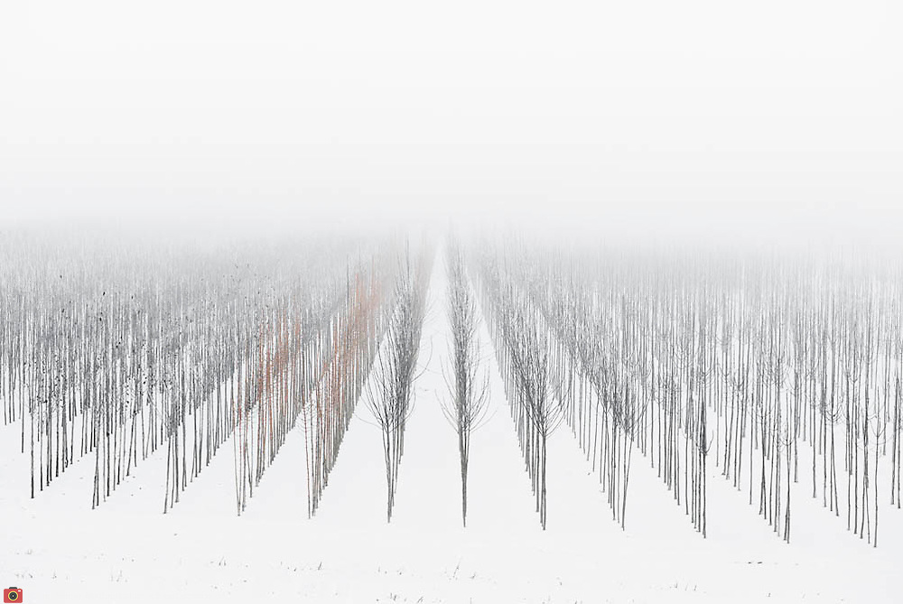 Nederland, 30 december 2010 Winterlandschap omgeving Tiel, kleine bomen in aanplant staan in de sneeuw op mistige dag.  schoon, sfeer, sfeerbeeld, slecht zicht, slechtziend, slechtziende, sneeuw, sneeuwval, space, spiegelbeeld, spiritueel, spirituele, ssneeuwen, stil, still, stilleven, stillshot, stilte, stock, stockbeeld, stockfoto, surrealistisch, surrealistische omstandigheden, symbolisch, symbolische, tree, uitzicht, vergezicht, vergezichten, verte, vervaagd, vervaagde, visueel gehandicapt beperkt, vredig, vredige, vriezen, vrij, vrijheid, wazig, wazige, weer, weersomstandigheden, weersomstandigheid, weersvoorspelling, wei, weide, weidsheid, weiland, weiland. Landscape, white, wijdheid, wijds, wijdsheid, winter, Winterkou, winters, winters weer, winterse, winterse taferelen, wintertijd, wintertime, winterzon, wit, wit dek, witte, zo vrij als een vogel, zwart wit, zwitserleven, zwitserleven gevoel ,, ontspanning, open, opname, piece of art, platte land, platteland, polder, polder landschap, poldergebied, polderlandschap, readymade, romantisch landschap, ruimte, ruimtelijk, ruimtelijke, ruimtelijke omgeving, ruraal, rurale omgeving, rust, rustgevend, rustiek, rustieke, rustieke omgeving, rustig, rustige, schepping space, schone, schone lucht, schoon Foto: David Rozing