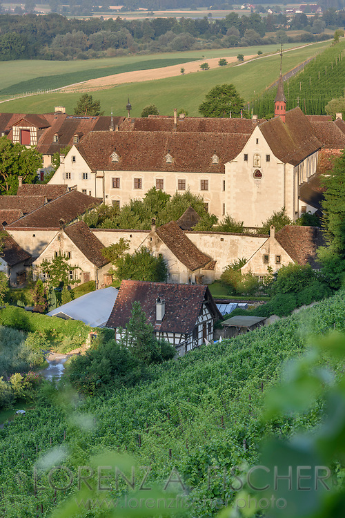 A vineyard and buildings of the charterhouse Ittingen on a nice and sunny summer morning in July, Frauenfeld, Thurgau, Switzerland