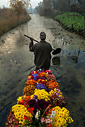 A flower seller makes his way to the early morning floating market on Dal Lake, Srinagar, Kashmir