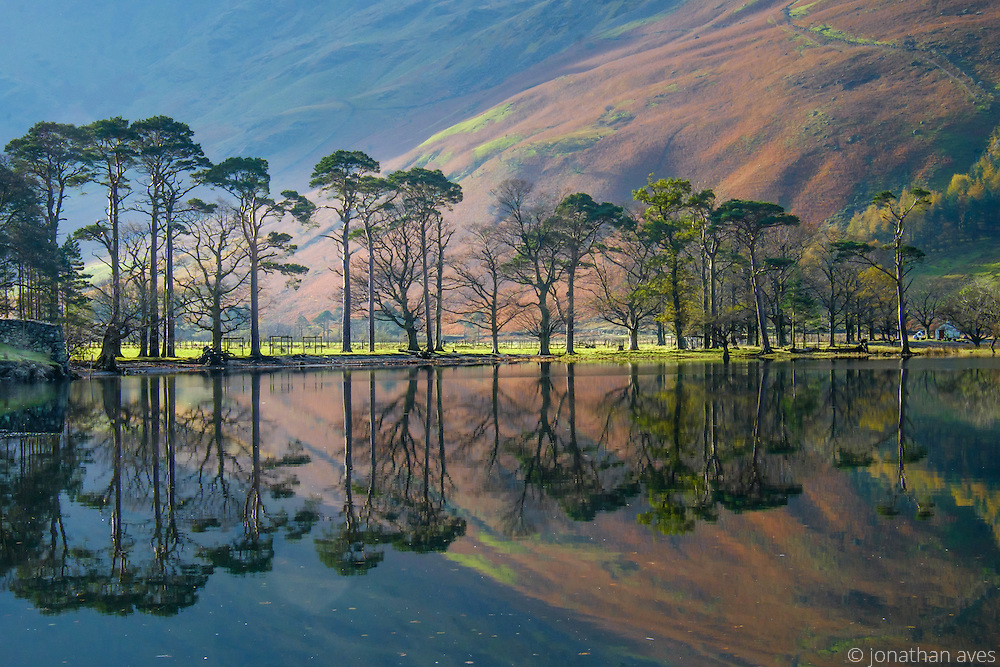 Pine Trees reflect in Buttmere Lake, Lake District, Cumbria, UK