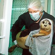 Seal Hospital in Pieterburen, the Netherlands.