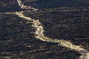 Footpath across burnt heathland. Upton Heath, Dorset, UK.