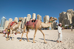 Tourist camels on beach at JBR Jumeirah Beach Residences in Marina district of Dubai United Arab Emirates