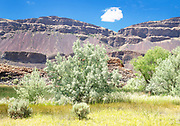 Russian Olive Trees and Ancient Basalt Cliffs, Eastern Washington