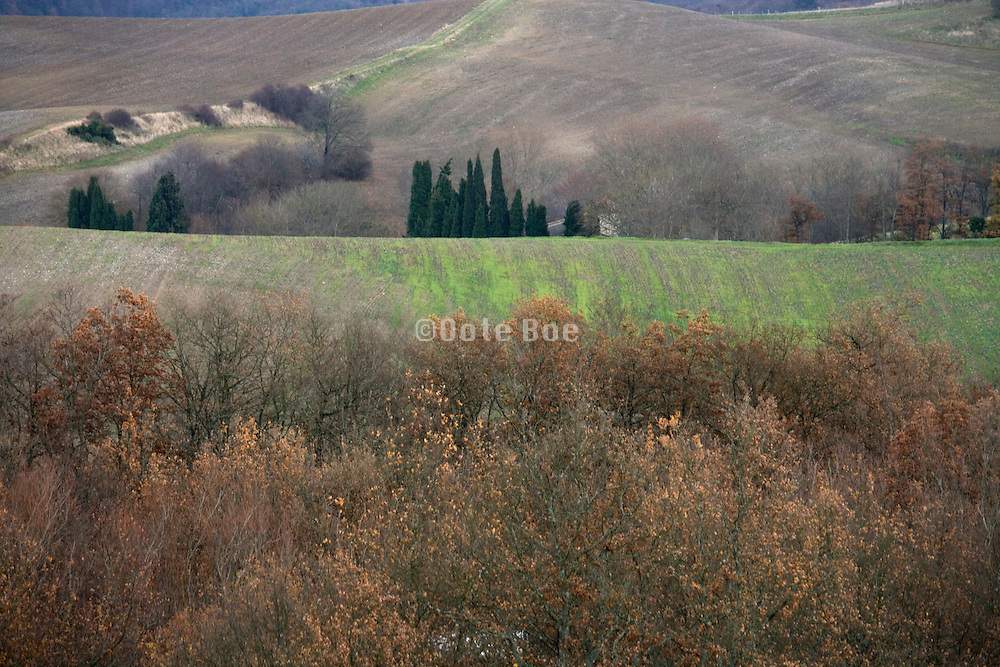 late autumn wood and agricultural hilly landscape
