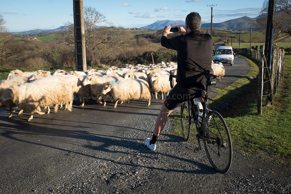 Cycling  - and avoiding sheep in the Basque Country, France