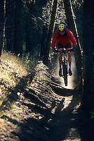 A mountain biker races along a forest trail in Jackson Hole, Wyoming