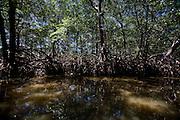 Canavieiras_BA, Brasil...Manguezal em Canavieiras, Bahia...Mangrove in Canavieiras, Bahia...Foto: LEO DRUMOND / NITRO