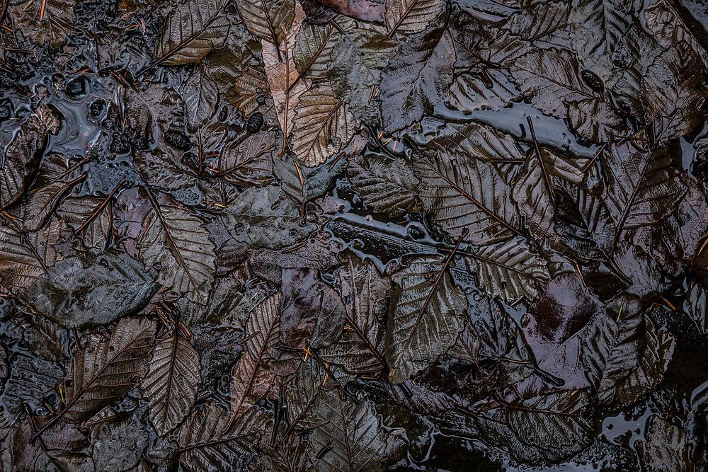 Leaves on a bridge deck. Big Creek campground.