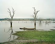 Benalla with trees, Australia