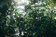 """14.01.2018 Magdeburg, Gruson- Gewächshäuser, kleines Tropenhaus.<br /> <br /> Hohe Luftfeuchtigkeit und 25 Grad, der Temperaturunterschied zu draussen ebenfalls 25 Grad. Die Gruson- Gewächshäuser sind auf tropische und subtropische Pflanzenarten spezialisiert, 4000 gibt es davon in den zehn Gewächshäusern zu sehen. Der Stifter, Hermann Gruson, ein Maschinenbauunternehmer der vornehmlich wegen seiner Waffenproduktion im Gedächtnis blieb, sammelte Botanik aus aller Welt. Der sogenannte """"Schwiegermutterstuhl"""", ein Kakteen,  wurde nach ihm benannt: Echinocactus grusonii.<br /> <br /> <br /> <br /> ©Harald Krieg"""