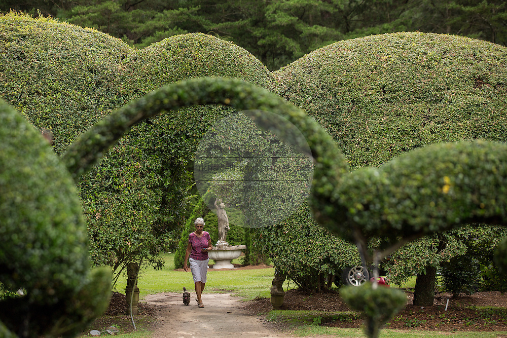 A visitor strolls through Pearl Fryar Topiary Garden August 21, 2013 in Bishopville, South Carolina. Pearl Fryar without any horticultural experience turned discarded plants into an amazing topiary wonderland in his former corn field in a tiny village in rural South Carolina.