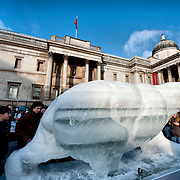 Ice Polar Bear @ London