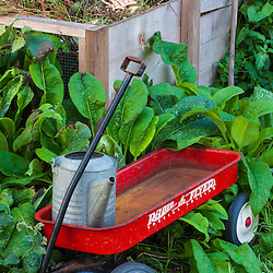 Radio Flyer wagon and compost pile at Strawbery Banke Museum in Portsmouth, New Hampshire.