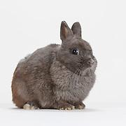 20150617 Netherland Dwarf Rabbits