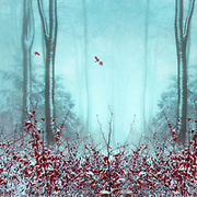Surreal forest in Winter<br /> Society6 prints: http://bit.ly/2yTaPxD<br /> Redbubble prints & more: http://rdbl.co/2gTdihb