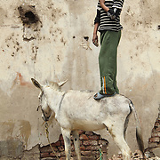 A boy from Dahab Island in Cairo shows off on the back of a donkey.