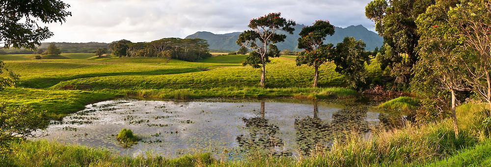 Panorama landscape of pond at sunrise, Kauai, Hawaii