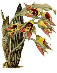 The botanical cabinet<br />London :John & Arthur Arch ...,1817-1833.<br />https://biodiversitylibrary.org/page/28887860