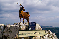 Domestic goats at the Verdon Gorge in southern France.